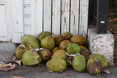 Coconuts (SReed99342) Tags: florida keywest coconuts rubbish straws drinks