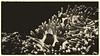 clowns in an other world (tomsyrk) Tags: fische clownfisch fisch clown wasser unterwasser unterwasserfotografie waterscape waterworld underwater wasserwelten mono monochrome monochrom sw bw bnw bwd blackandwhite blackwhite blancoynegro blacknwhite black noireblanc noiretblanc sepia