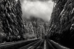 surrounded by giants... (Alvin Harp) Tags: wa18 washingtonstate pnw trees winteryscene snowy snoqualmie northbend february 2017 sonyilce7rm2 fe24240mm trucking alvinharp monochrome blackandwhite bwwinter bw