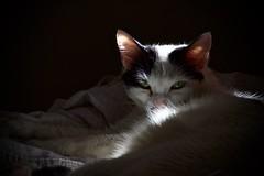(OhDadi Picz!) Tags: gatobranco gatto lava gato gat cat