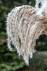 Frozen (patrick.schrimpf) Tags: frozen frost winter natur eiskristalle