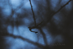 light on a cloudy evening... (ggcphoto) Tags: water droplet dark light cloudy day evening twig nature dof depthoffield