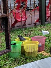 Singapore bird party at the Sri Veeramakaliamman Hindu temple (ashabot) Tags: singapore asia festial hindu hindufestival birds pigeons