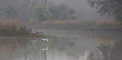 Morning mist (Thomas Retterath) Tags: 2017 baum nature natur tree forest wald india indien asia asien tadoba thomasretterath wildlife teich sea nebel fog