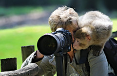 Professionals among themselves! :-) (Sckchen) Tags: animals zoo monkey tiere ape affen affe