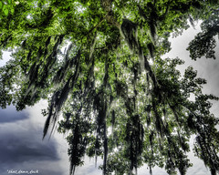 Sunlight Through the Moss (that_damn_duck) Tags: nature moss southcarolina