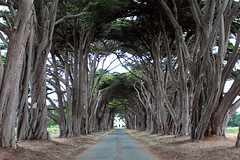 Tunnel in Color (Jane Inman Stormer) Tags: california road door old trees summer plant building green leaves lines station radio coast boulevard path branches entrance july tunnel historic rows bark lane wireless tall canopy montereycypress boundaries linear linearperspective pointreyesnationalseashore nationalhistoriclandmark onepointperspective rcamarconiwirelessstation