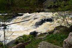 River Vantaanjoki, Myllykoski rapid (Palojoki, Nurmijärvi, 20120512) (RainoL) Tags: finland river geotagged spring vantaanjoki may u fin rapid 2012 uusimaa nurmijärvi 201205 myllykoski palojoki 20120512 geo:lat=6045515900 geo:lon=2485258600