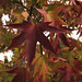 Feliz otoño  * Happy autumn