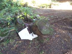 2015 Scouts Shoreline Cleanup