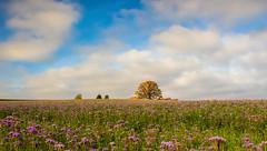 Herbstbaum in Winterberg (nicopeter) Tags: art canon schweiz herbst feld himmel wolken sigma f18 baum winterberg 1835mm eos700d nicopeter