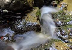 Soft Swirl (Tones Corner) Tags: water stream nzscene nzbeauty nativenzbush