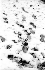 Where they went? (rodrigo.blackburn) Tags: blackandwhite snow spain footprints burgos castillayleón fujiacross100 olympusom2n d7611 nikoncoolscaniv zuiko50mm18