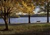 Park Bench (d_russell) Tags: autumn trees fall leaves shawneemissionpark