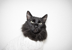 portrait white black male sweater clothing flash kittens petclothing d5200 1855vrii