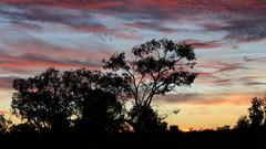 2016.11.18.05.06.03-Dawn on Lake Menindee (www.davidmolloyphotography.com) Tags: newsouthwales darlingriver menindee kinchega kincheganationalpark lakemenindee dawn