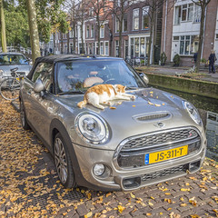 IMG_1073 (digitalarch) Tags: 네덜란드 델프트 netherlands delft 차 car