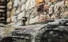 La ardilla (Nebelkuss) Tags: india gwalior ardilla chipmunk fuerte fort fujixt1 nikon85f20