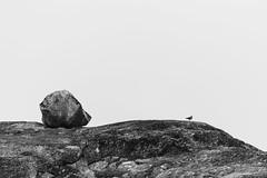 Sallyhamna Rock & Gull 2016 Lauri Novak (LauriNovakPhotography) Tags: arctic norway spitsbergen travel rock bird seagull svalbard minimal
