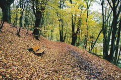 the snow of autumn (lina zelonka) Tags: marburg germany hessen linazelonka hesse deutschland autumn fall herbst leaves blätter bench bank park nature trees wald forest lahntal lahnvalley europe europa nikond7100 18105mm