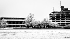 (Nico_1962) Tags: winter snow sneeuw leica summicron m8 zwolle nederland rangefinder meetzoeker bw zwartwit leicam manualfocus primelens