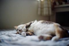E Meow's life (Steve only) Tags: konica hexar rf canon lens 50mm f12 5012 l39 leicascrewmount leicathreadmount ltm m39 rangefinder kodak pro image 100 film epson gtx970 v750 e喵 cats