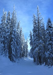 For a blue run, Round a Bout is very flat (Ruth and Dave) Tags: sunpeaks skiresort roundabout bluerun road piste skirun winter todmountain
