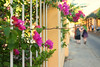 Cartagena Street Scene (mclcbooks) Tags: cartagena bolivar colombia flowers floral fence people happyfencefriday hff