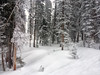 Colorado landscape. (iphone shot) (Images by Walter Lesus) Tags: colorado rockies snow landscape mountain tree trees fir pine frost