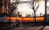 (Rob-Shanghai) Tags: shanghai people street city banner bike kids riding 35mm summilux trees cranes wall sunlight leica m240