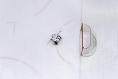 Number 1 [Explore on 27 Feb 2017] (edward.cheung) Tags: hongkong kid a7r2 tamron sony elements hockey