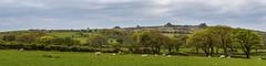 Scenery in the Preseli Hills - Pembrokeshire, Wales (dejott1708) Tags: preseli hills pembrokeshire wales panorama landscape united kingdom great britain sheep trees