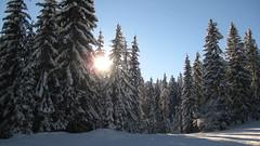combloux (fionadodsworth) Tags: combloux skiing