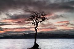 Milarrochy Tree (overhoist) Tags: overhoist canon canoneos5dmarkiii lochlomond milarrochytree milarrochybay sunset scotland squirter