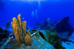 Sponge on Keith Tibbetts Wreck, Cayman Brac (jcl8888) Tags: marine abundant life alive quiet deep tokina1017mm sea water ocean blue artificialwreck sponge underwater diving scuba wreck cayman fisheye nikond7200