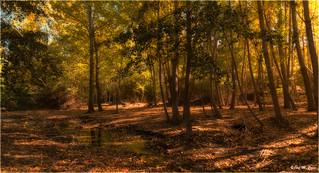 En el bosque mágico (Aldeire-Granada)