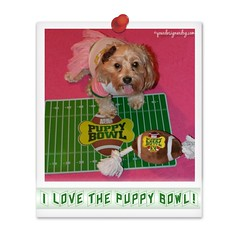 5 Reasons the Puppy Bowl is Better than the Super Bowl (yourdesignerdog) Tags: ifttt wordpress all posts wordless wednesday bed blog cheerleader costume cute dog breeds smiling football puppy bowl super tongue out