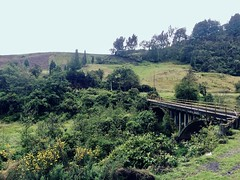 Represa del Neusa, Colombia. (sadday_ksg) Tags: tree árboles bosque naturaleza nature paisaje