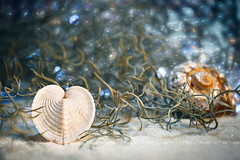 Loving the Pure Friendship (CJ Luck) Tags: beach bokeh cockleshell focusbkt friendship heartcockleshell ocean pure stackshot valentines abalone adjectives backlight bronze brown cardiumshell clam clean closeup conch cowrie cowry dazzle focusstacking glaring glimmering glint glitter glorious heart heliconfocus illuminate ledlight light love macro mollusca moss occasion plant sand seashell shell shellfish shimmer shimmering sparkle swirls twinkle white