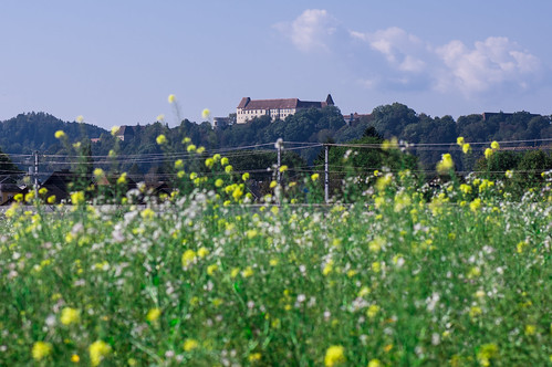 Schloss Seggau through grasses