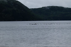 PDSCF2175 (Adzuki Darling) Tags: parc national du fjorddusaguenay september 2016