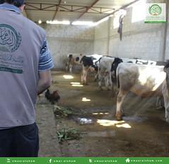 تجهيز الأضاحي 2 (emaar_alsham) Tags: emaar العيد الشام alsham تجهيز اعمار شراء أضاحي اضاحي emaaralsham