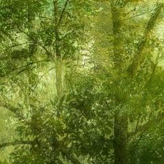 Natural State of Mind (eterem) Tags: trees square natural state artistic fineart gimp multipleexposure mind triple hss mindscape