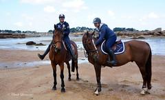 Ballade  cheval  Trgastel (claude.lacourarie) Tags: horse beach caballo cheval brittany bretagne breizh armor plage cavalli cavallo cavalo chevaux paard paarden cotes tregastel cavalire tregor  tourony