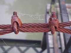 holding it together (photography_isn't_terrorism) Tags: morning bridge nature misty rust spiderweb foggy orb cable cobweb railing