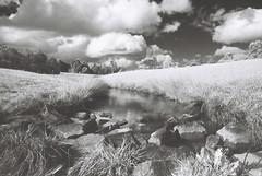River (goodfella2459) Tags: white black film rollei analog 35mm river lens ir nikon east filter 400 infrared 24mm af nikkor agfa milf f4 bowral hoya 400s r72 f28d