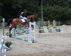 Doorn (Steenvoorde Leen - 1.7 ml views) Tags: horses horse jumping cross doorn masters pferde pferd reiten manege paard paarden springen 2015 utrechtseheuvelrug hindernis sgw arreche manegedentoom