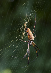 Spider (yoelisd2003) Tags: florida outdoor em1 sigmalens olympuscamera berdingtrailfloridaberdingtrail olimpusomdem1