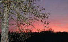 IMG_9613 (Anita VERNEAU) Tags: soleil coucher ciel arbre