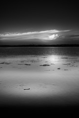 Driftwood (Jens J. Hoffmann) Tags: wood sea urban bw france beach landscape nikon mood outdoor surreal d750 sw languedoc einfarbig blackwhitephotos
